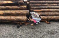 わが家の材木に出会いに行きました